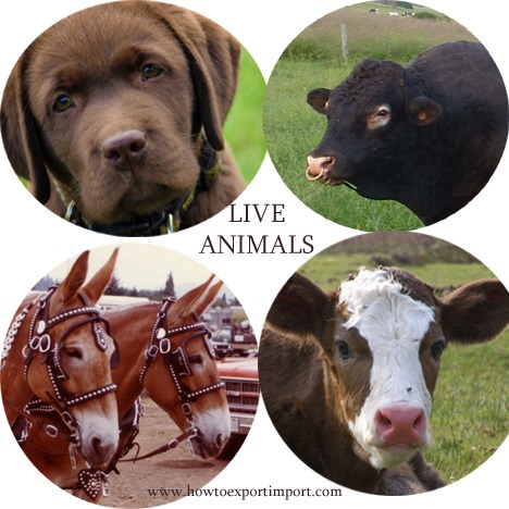 Documentation and procedures to import Live Animals