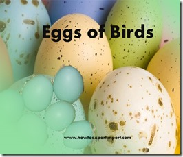 Eggs of Birds