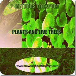 6 plants and trees www.howtoexportimport.com_2