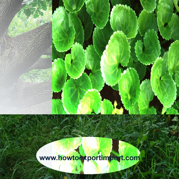 plant quarantine india