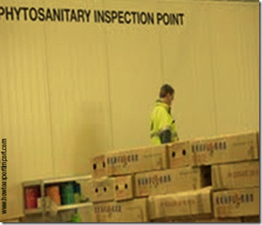 Office to contact Phytosanitary inspection in India